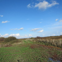 Fields and Wildlife - Forty Acre Farm