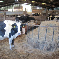 Cattle Shed - Forty Acre Farm