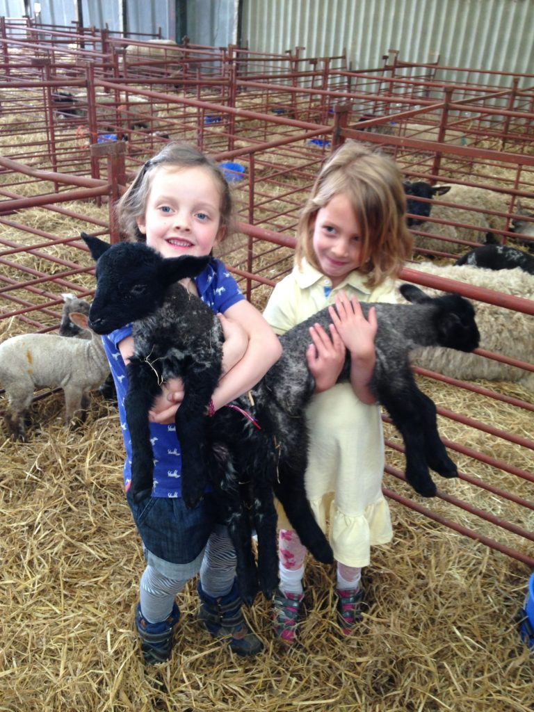 Film or photo shoots at lambing time. Kent and East Sussex