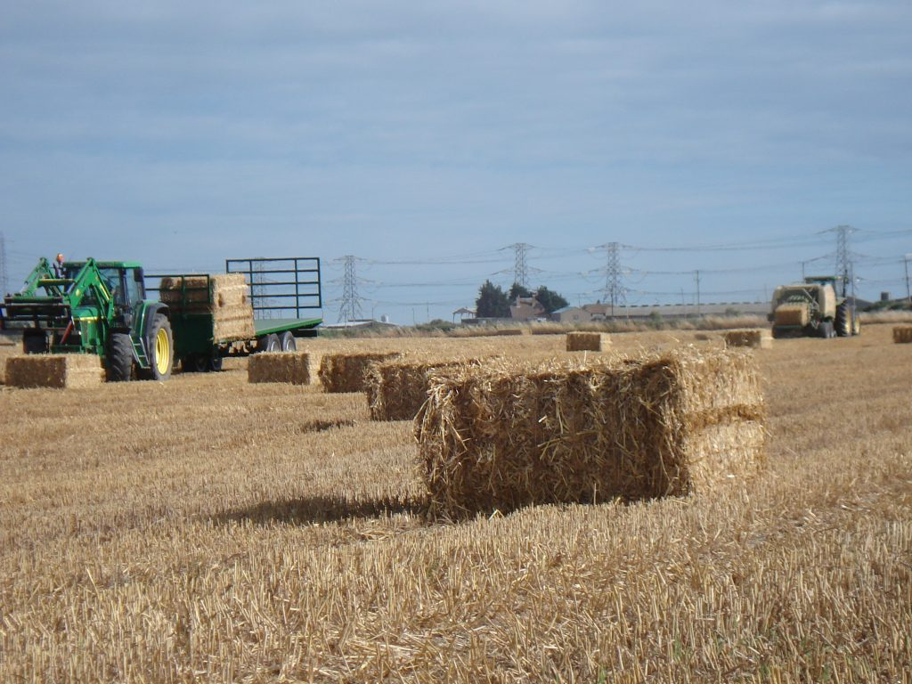 Baling straw - Forty Acre Farm
