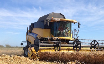 Wheat harvest - Forty Acre Farm header