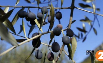 Olive producer Neil Davy speaks to Chris Evans