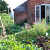 Veggie patch at Lidham Hill Farm