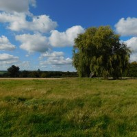 Humphries Farm field with weeping willow